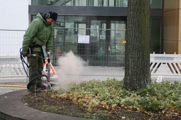 Belüftung in Injektion von Bodenhilfsstoffen  in begrenzter Baumscheibe