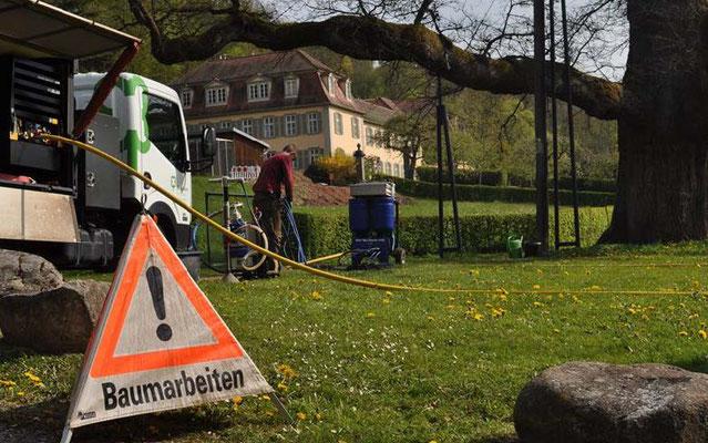 Sanierung des Naturdenkmals König-Ludwig-Eiche in Bad Brückenau