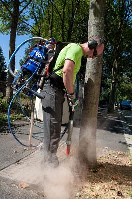 Sanierung eines Straßenbaumes