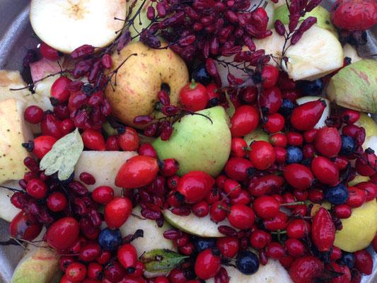 Wilde Hecke - wilde Früchte