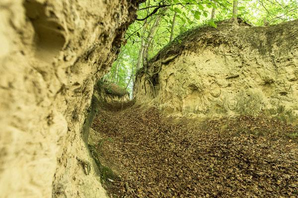 Waldlößhohlweg bei Bickelsohl