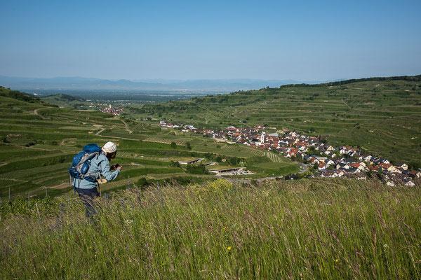 Am Badberg mit Blick auf Oberbergen und Oberrotweil