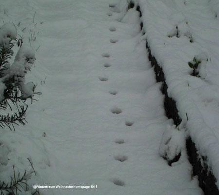 Schneespur Aufnahme Garten 2015