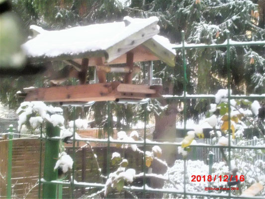 Aktuell Garten 3 Advent