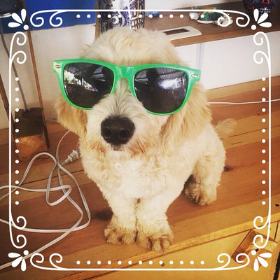 surf, surfdog, hostal dog, dog, poodle, puppy, glasses, lentes, mexiko, puerto escondido