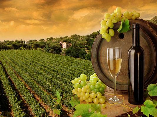 Themenreise Wein