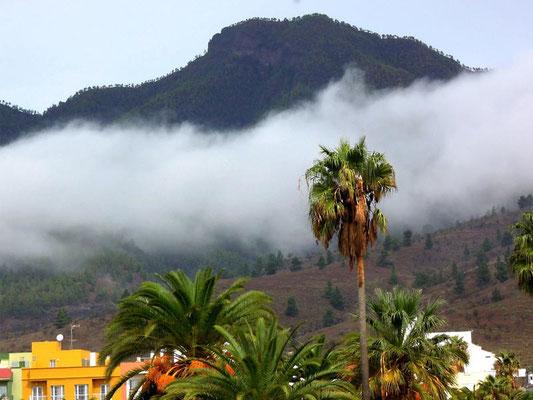 Natur auf La Palma