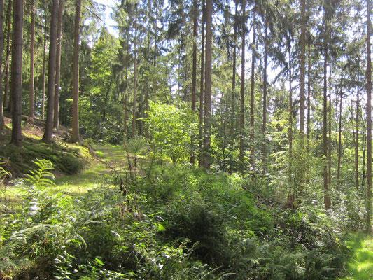 Wald um die Hollermühle