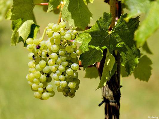 Themenreise Wein - Genuss in Deidesheim
