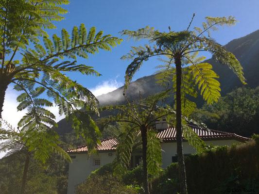 Natur auf Madeira