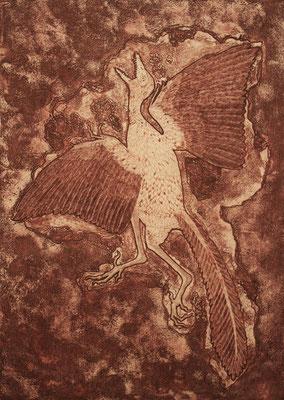 Archaeopteryx  2015 450×320 エッチング、エングレーヴィング