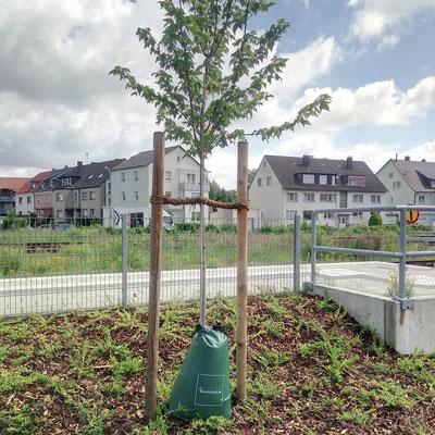 Wassersack zur effektiven Baumbewässerung