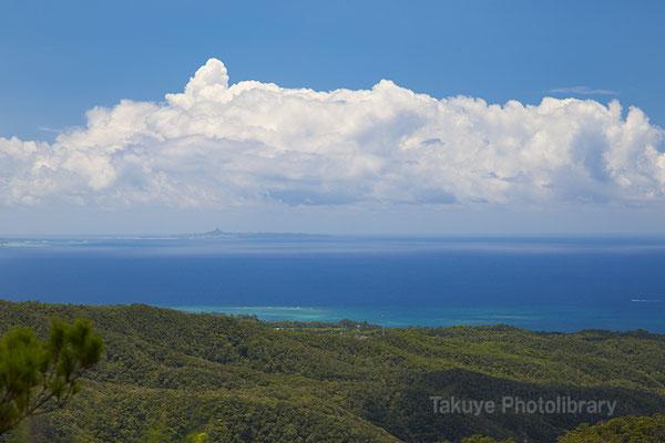 ブロッコリーの森と東シナ海