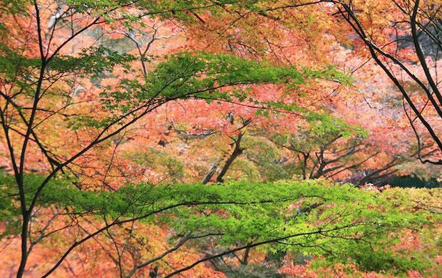 09-0015 京都の紅葉