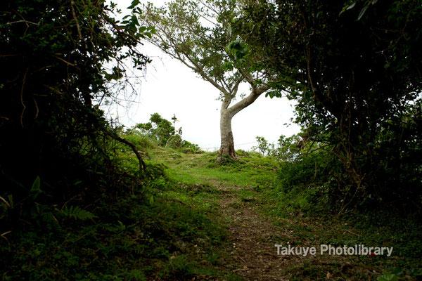 06c-0008 浦添城跡の最東端。ここから「ハナリジー」を見ることができる