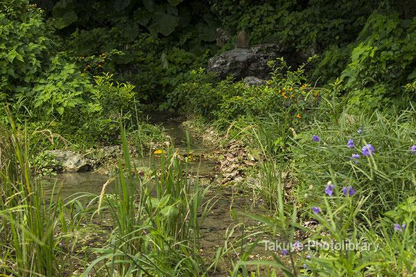 06h-0010 ヤブサツの浦原 受水走水 -うきんじゅ はいんじゅ  稲作発祥の地