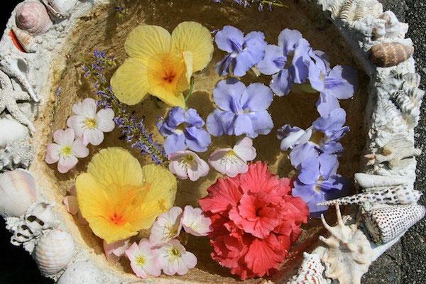 12-0040 水鉢に浮かぶ夏の花