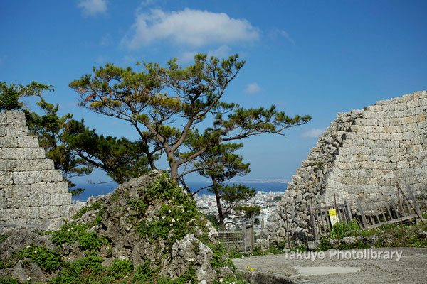 06c-0023 浦添城跡 琉球松と城壁