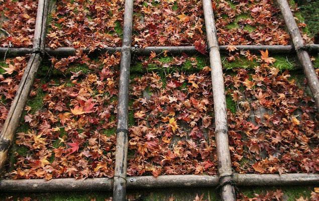 09-0014 京都の紅葉