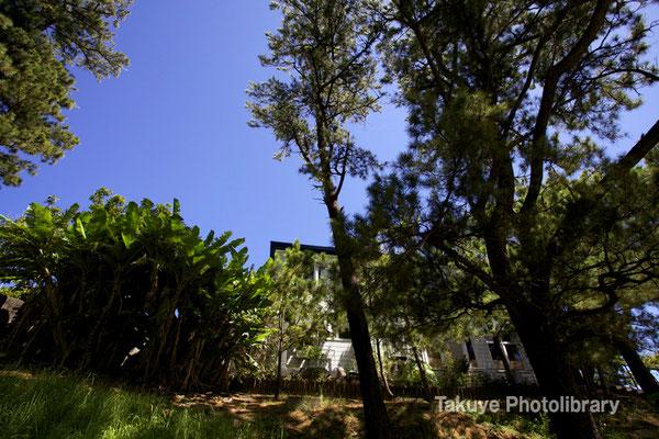 07-0084 林の中の洋館