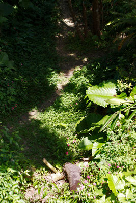08-0025 神社周辺の自然。光と陰、緑の葉と赤い花。