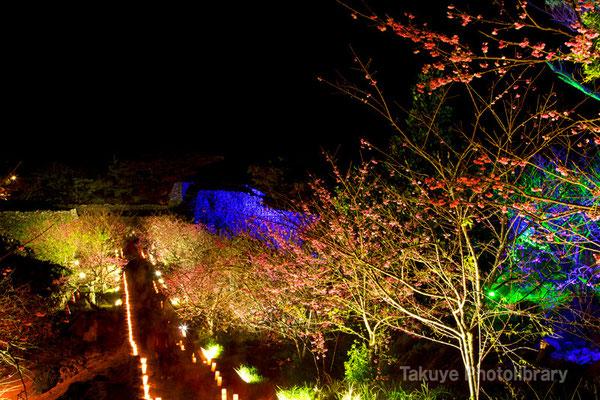 02-0036 今帰仁城跡の夜桜