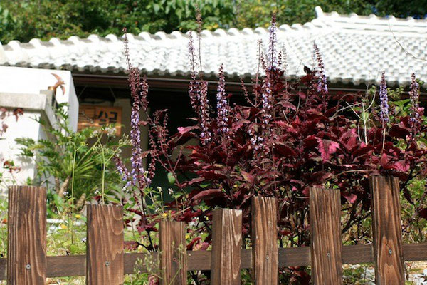 07-0043 伊豆味の森の古民家カフェ