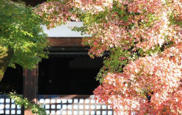 09-0016 京都の紅葉