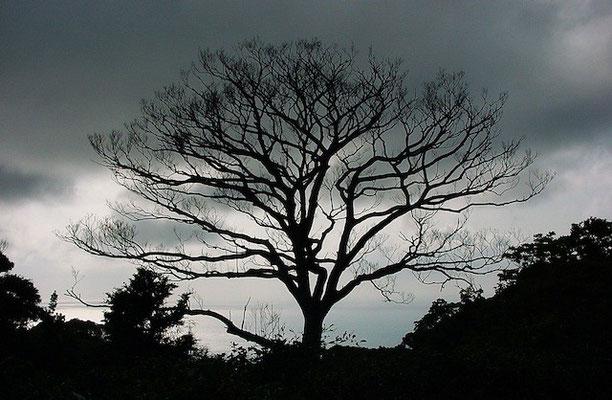 07-0001 薄暮の落葉樹シルエット