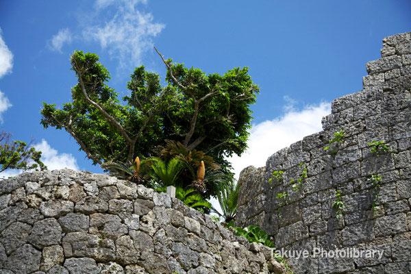 04-0018 兵馬の訓練をしたといわれている西の郭の城壁。