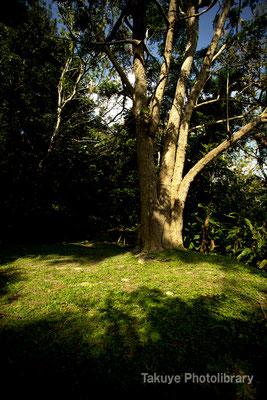 森の日溜まり