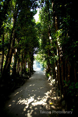 07d-0017 備瀬のフクギ並木 野焼きの煙 コーラルを敷き詰めた白い道 沖縄の原風景