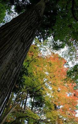 09-0013 京都の紅葉