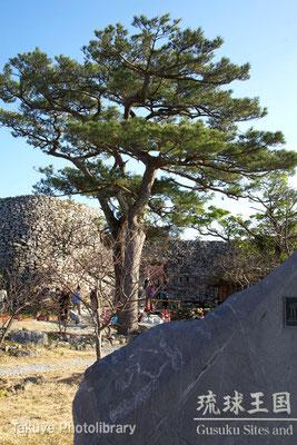 02a-0008 今帰仁城跡 桜まつり