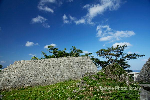 06c-0022 浦添城跡 琉球松と城壁