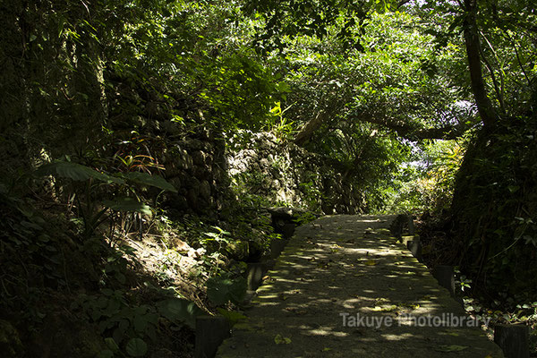 06h-0015 ヤブサツの浦原 浜川御嶽への参詣道