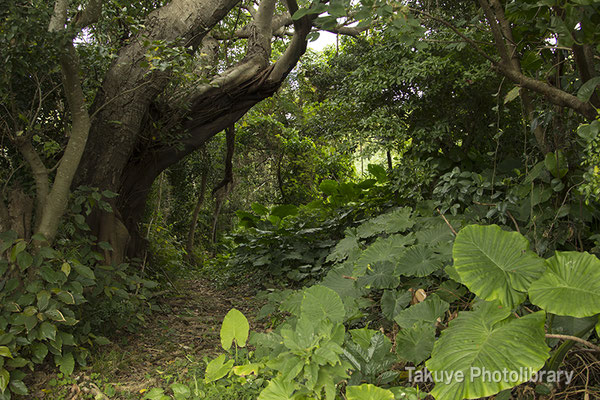 亜熱帯の森 末吉公園