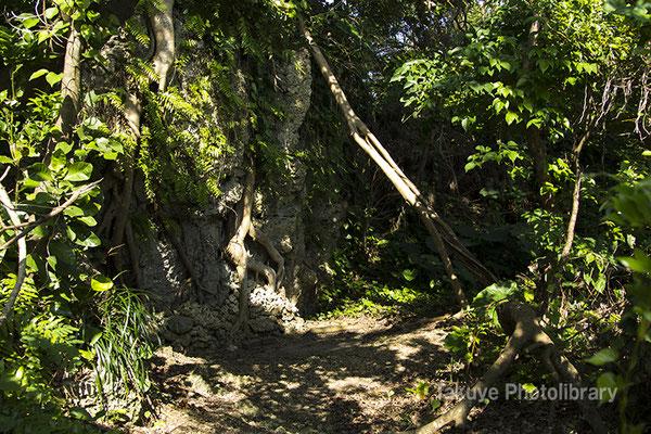 06i-0001 ガジュマルの根が張る、御嶽入口北側の崖。