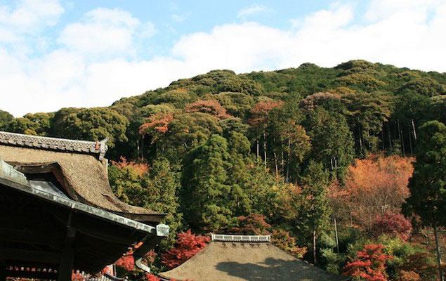 09-0020 京都 清水寺