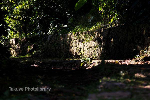 08-0035 宜野湾御殿(琉球王府王子家)の墓へと続く石畳の参道