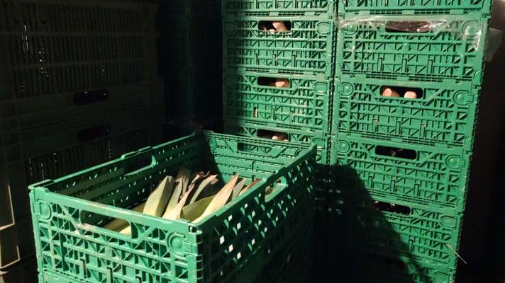 Gemüse und Salate werden im Kühlraum eingelagert