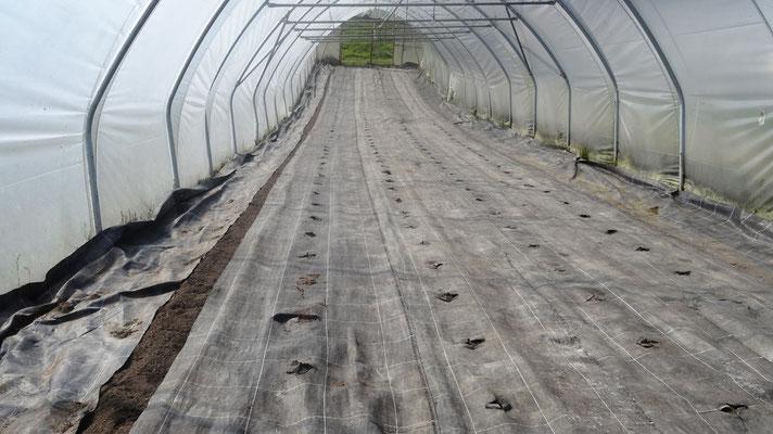 Der erste Tunnel ist wieder leer und bereitgemacht zum Tomaten setzen.