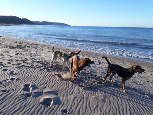 Hundespielfreuden -wo gibt's sowas noch in der Schweiz?