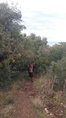 Cécile's Beerenpflückdrang beim Aufstieg zur Burg bei Platamonas