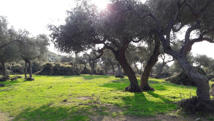 Fairy Tale telling olivetrees with hiding stones