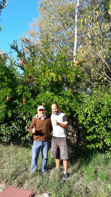 Nikos&Pj vor Granatapfelbaum am Camping Venezuela