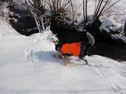 An einem Abschnitt mit etwas weniger Schnee ließ es sich leichter suchen.