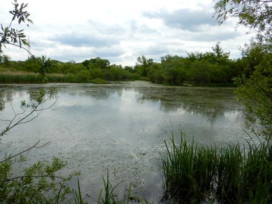 Es gibt auch größere Seen im Auwald.