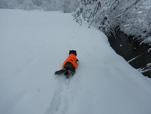 Manchmal musste sich Bagheera wie eine kleine Walze durch den Schnee wühlen.