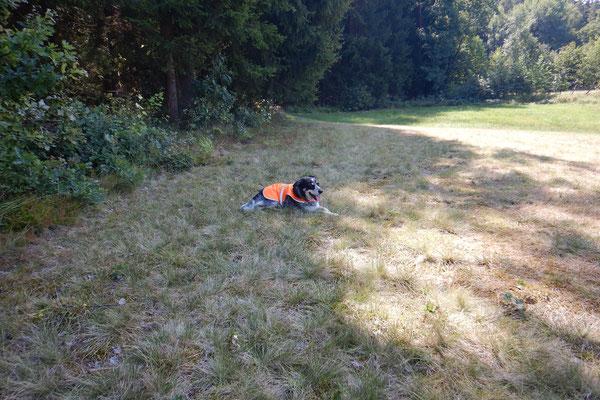 Was tut Hund, wenn Frauchen im Sommer beschäftigt ist? Er ruht sich im Schatten aus.